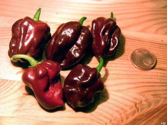 I 10 peperoncini più piccanti al mondo