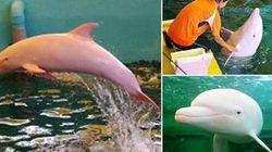 Il delfino che