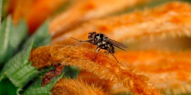 Raccontare mosche è un'arte lontana dai