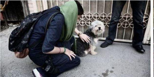 Iran, 74 frustate e multe per chi compera o porta a spasso il cane.