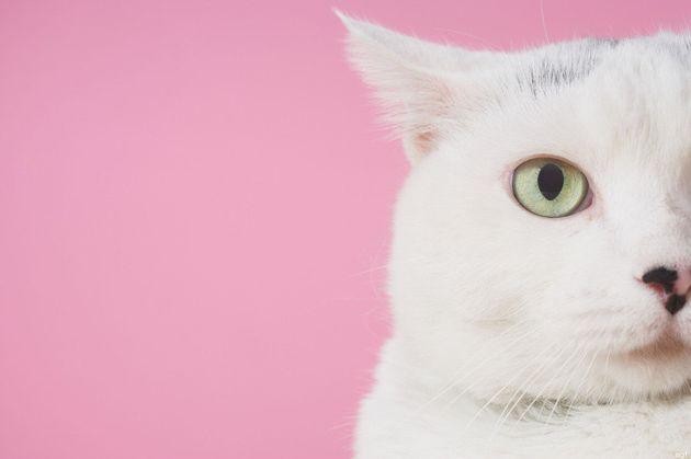 5 gesti quotidiani che pensi facciano bene al tuo animale domestico, e che invece lo danneggiano