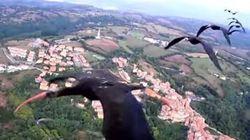 Questi uccelli sono arrivati in Italia capitanati da un ultraleggero
