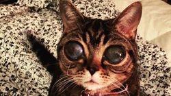 Matilda, la gatta con gli occhi da alieno è una star su