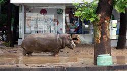 Caccia a leoni e ippopotami nel centro di Tbilisi