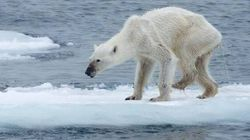 Questo orso polare è l'emblema dei cambiamenti