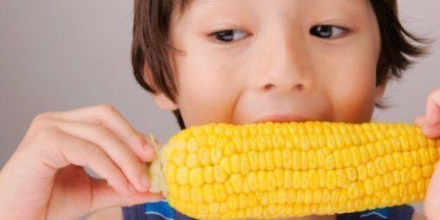 Ogm, rimane il divieto in Italia. Il Consiglio di Stato respinge il ricorso dell'agricoltore Giorgio...