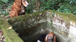 Questi due cani hanno capito davvero che cos'è
