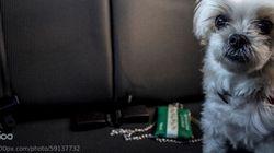 Lascia il cane nella macchina bollente, al ritorno il poliziotto le fa provare la stessa