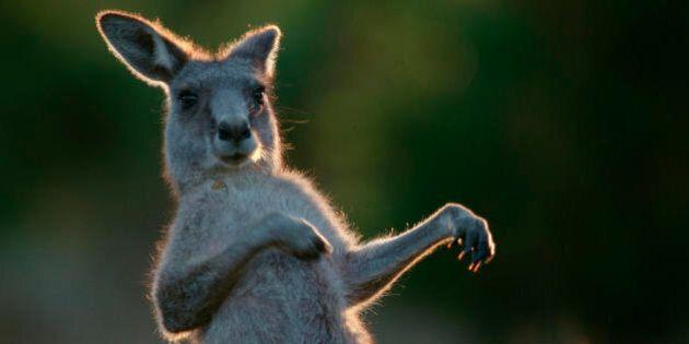 Dall'orango al canguro, lo zoo della politica italiana non si fa mancare