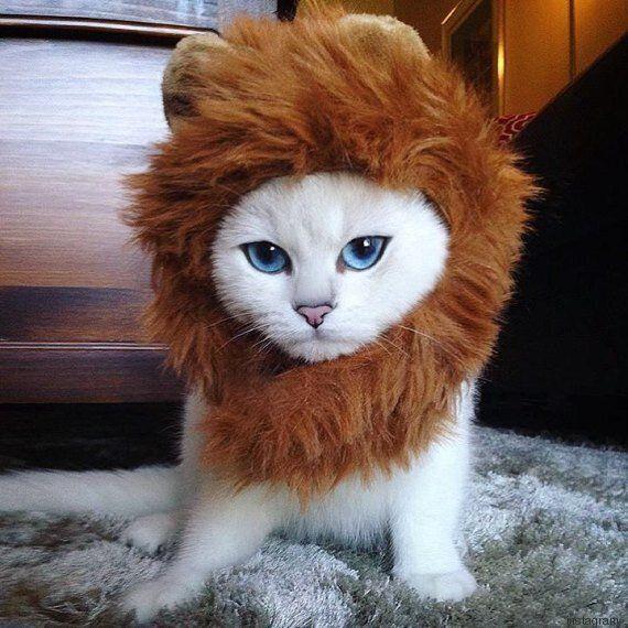 VIDEO. Coby The Cat, il gatto dagli occhi blu ha quasi 300mila seguaci su