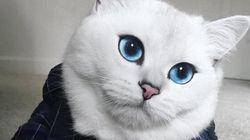 Con i suoi occhi blu, Coby ha conquistato Instagram (e gli