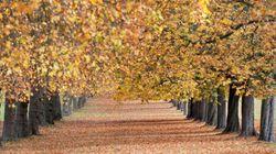 Arriva l'autunno. 5 cose che forse non sapete
