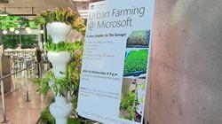 Alla Microsoft la verdura si coltiva in