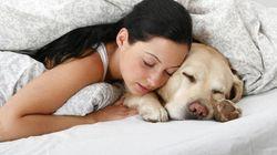 Dormire con il nostro amico a quattro zampe ci fa sentire più rilassati e