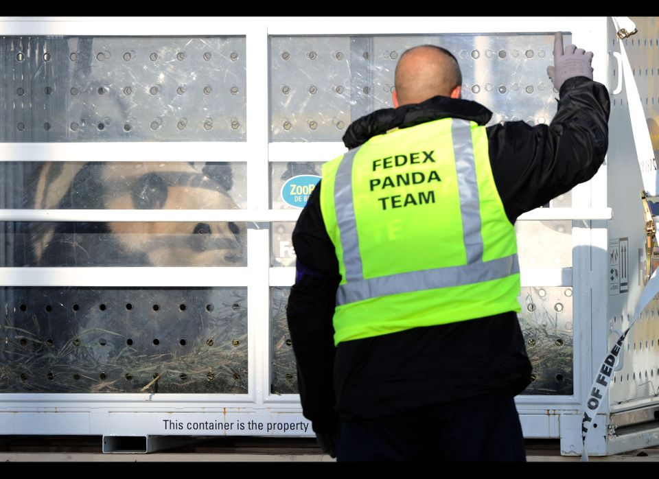 An assistant supervises the unloading of the cage carrying the two Chinese pandas arrive at Paris Roissy airport on January 1