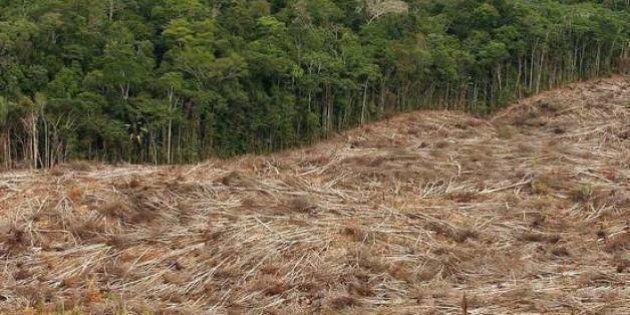 Hanno ucciso Eusebio che difendeva le foreste per tutti