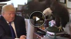L'aquila calva spaventa Donald Trump: beccata a pochi centimetri dalla mano