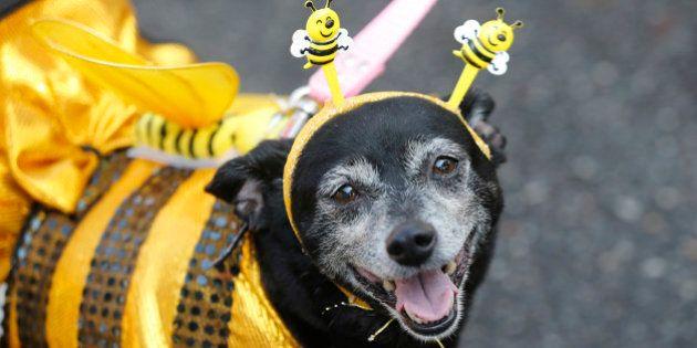 Carnevale, anche i cani si travestono. Costretti dai padroni a indossare tutù e maschere ridicole
