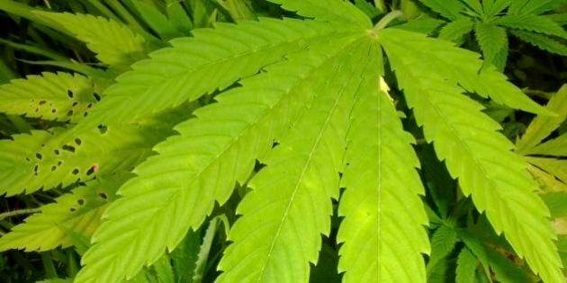 Marijuana piove dal cielo e distrugge la cuccia di un cane. Succede in Arizona, al confine tra Messico...