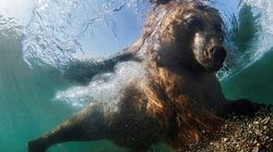 8 Splendide fotografie che illustrano le meraviglie della vita