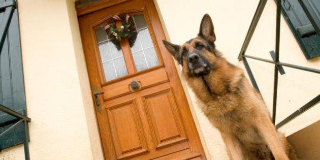 Chi trascura il proprio cane rischia il carcere. La sentenza del tribunale di Trento