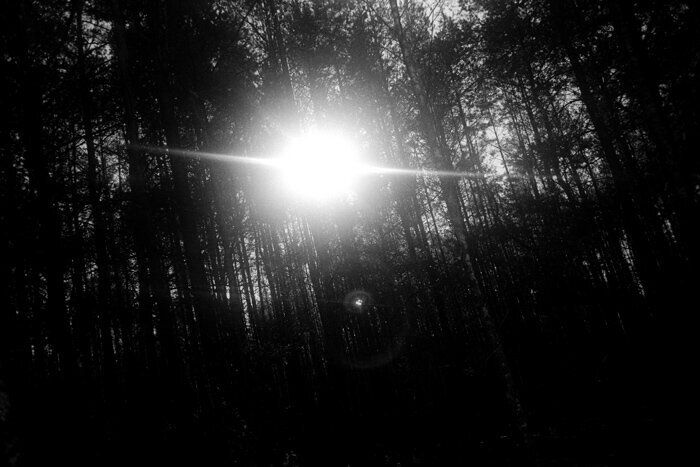 Sunlight shines through the Chernobyl forest in the exclusion zone.