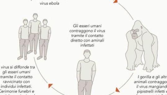 Ebola, come si trasmette e i casi anno per