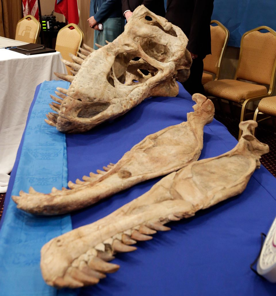 The skull and jawbone of a Tyrannosaurus bataar skeleton is displayed during a ceremony of its repatriation to Mongolia, in N