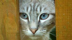 8 segnali che il tuo gatto sta tentando di ucciderti
