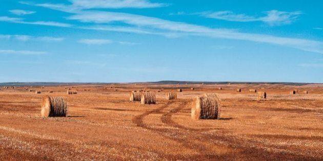 10 cose da sapere sul kamut, il grano antico bio che fa bene all'intestino