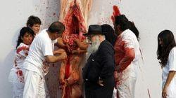 Cadaveri di animali squartati e messi in mostra: petizioni sull'arte estrema di Nitsch a