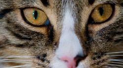 Il gatto non sarà mai un animale