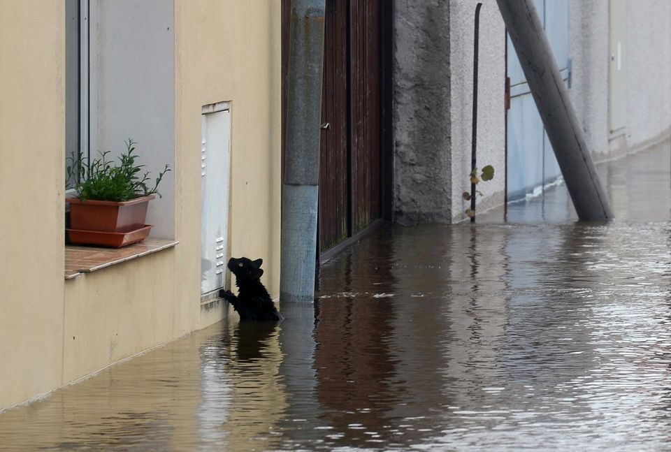 A cat tries to escape from water by the river Vltava in Kly, near Melnik, Czech Republic, on June 4, 2013. Torrential rain an