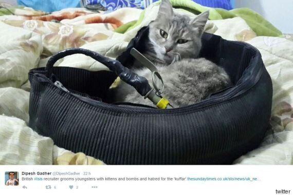 La gattina kamikaze. L'ultima trovata dell'Isis per reclutare giovani