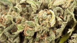 La marijuana è 114 volte meno letale