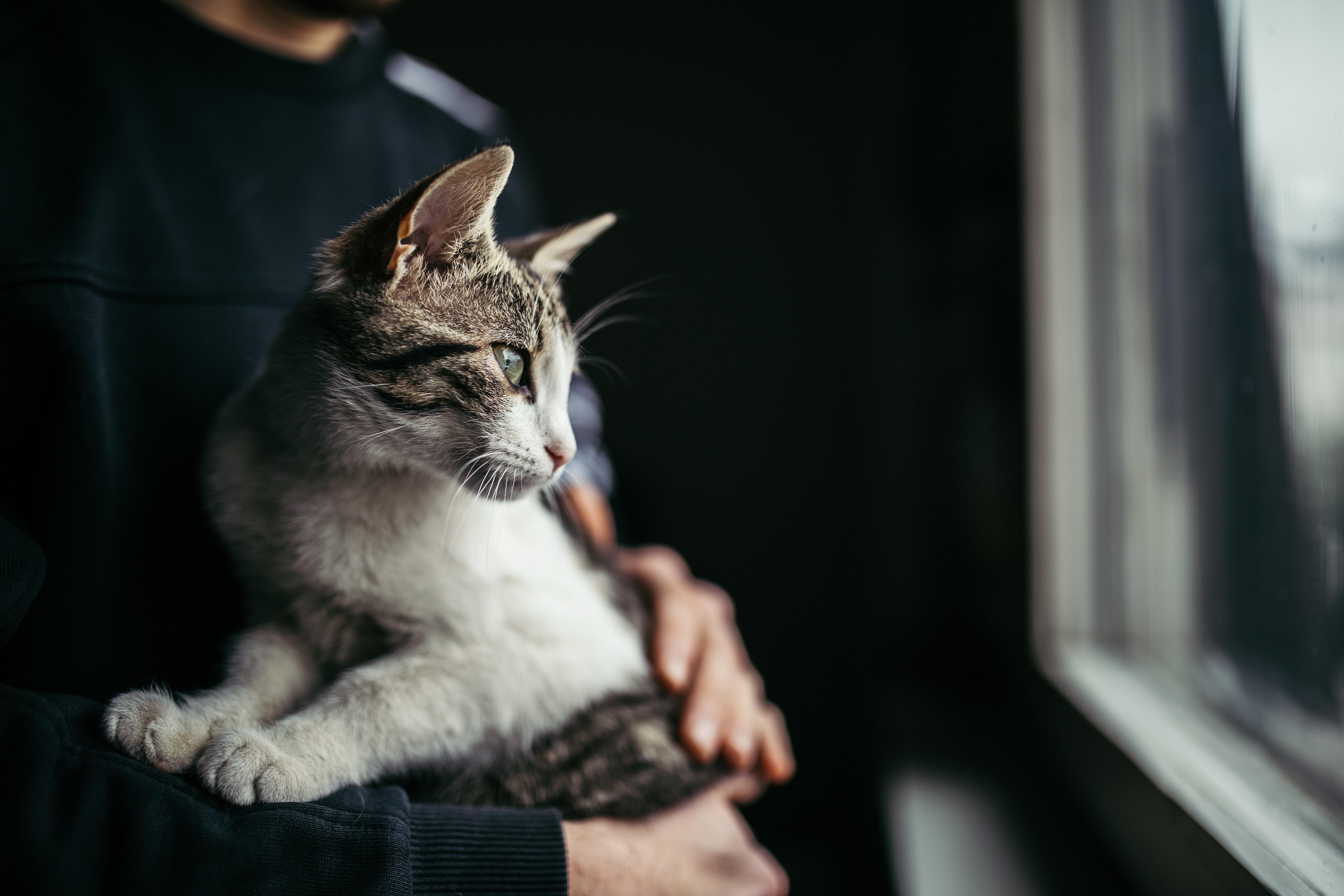 猫投げる動画SNS拡散、男性「視聴者楽しませるため」