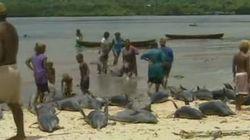 La strage dei delfini delle Isole Salomone. Uccisi 15mila