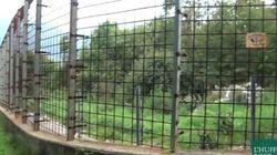 Ecco il recinto dove vogliono confinare l'orsa Daniza