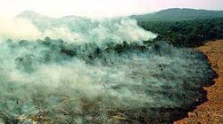 Il cuore verde del nostro pianeta a rischio