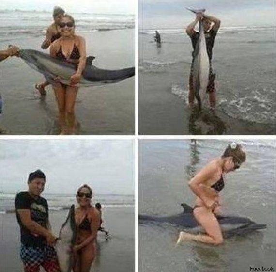 Scattano un selfie con delfino spiaggiato, ma dopo l'animale muore. Sul web si scatena la caccia ai due