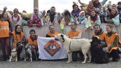 Papa Francesco riceve e benedice i cani maltrattati