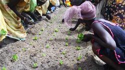 Gocce d'acqua per lo sviluppo