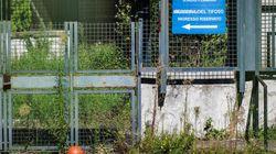 Lo stadio Flaminio in stato d'abbandono, la politica e la federazione intervengano per