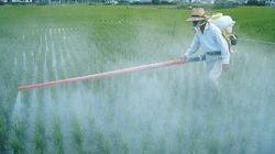 Attenzione ai pesticidi dentro e fuori dal
