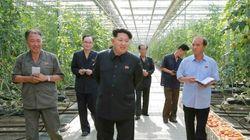 Il dittatore e l'insalata. Kim Jong-un farà controllare al microscopio ogni singola