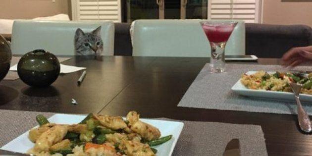 Una coppia di fidanzati fotografa per un anno il loro gatto che fissa il piatto quando mangiano