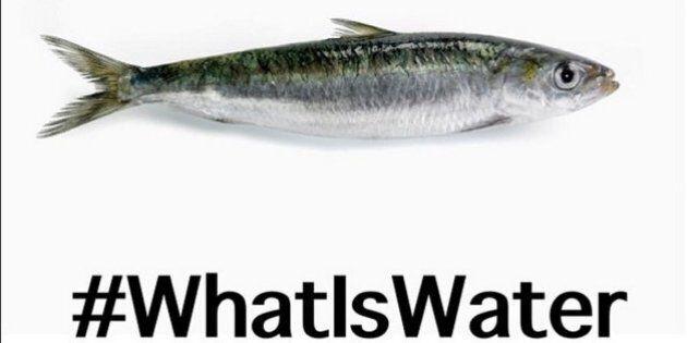 World Water Week, la settimana mondiale contro lo spreco d'acqua. 10 risorse per ridurre il problema...