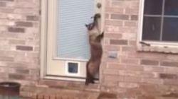 Come installare una porticina per il gatto