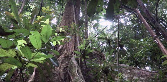 Effetto greening: la Terra è più verde