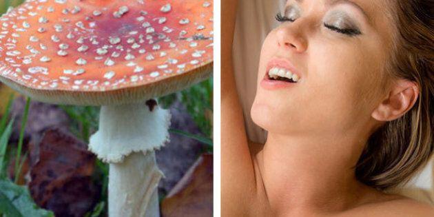 Fungo provoca orgasmo: scoperta di due ricercatori alle Hawaii pubblicata sull'International Journal...